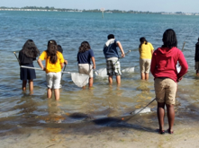 students dip netting in water