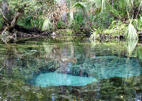 Chassahowitzka Springs clear water