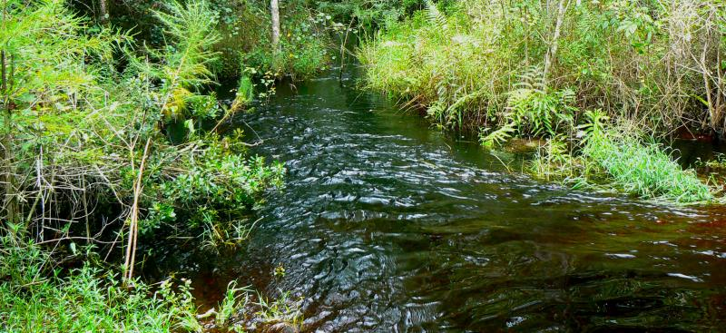 creek flowing through vegetation
