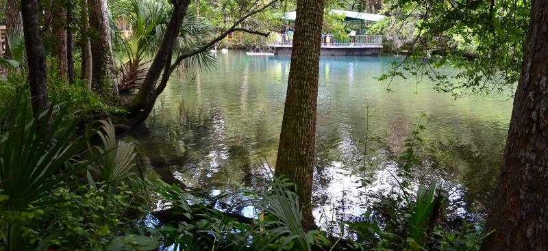 Homosassa Springs headspring at the state park