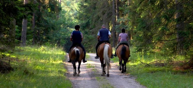 three horses and riders on shaded trail