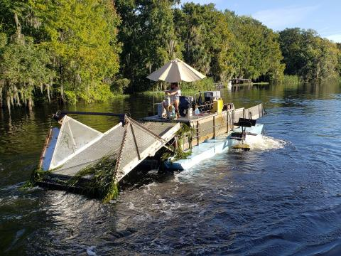 removing hydrilla River