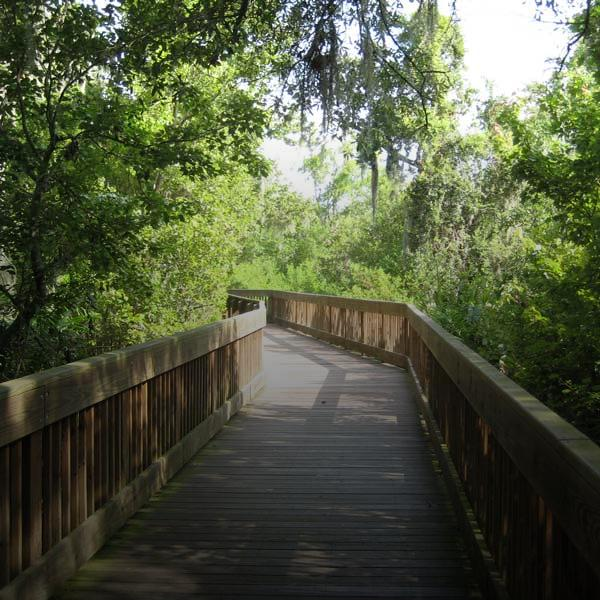 boardwalk through trees at Sawgrass Lake Park