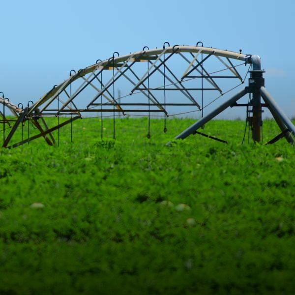 overhead irrigation system over crop