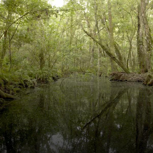 Brooker Creek Preserve in Pinellas County