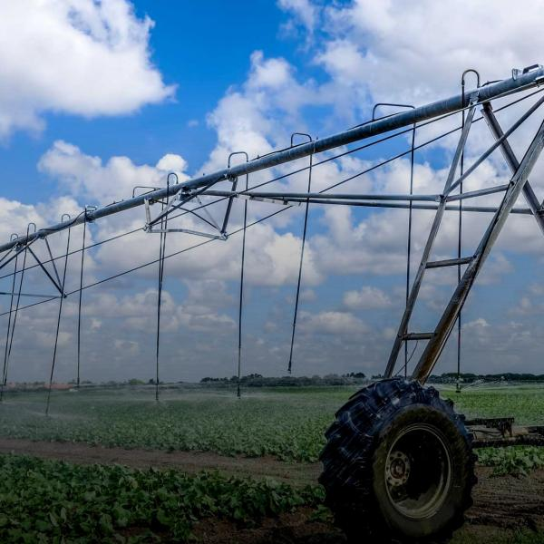 overhead irrigation over crop